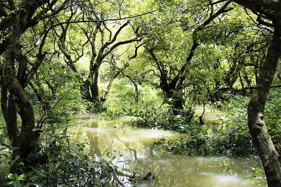 Ratargul Swamp Forest - Freshwater swamp in Bangladesh