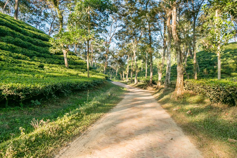 Srimangal: The tea capital of Bangladesh - Number three among the best places to visit in Bangladesh.