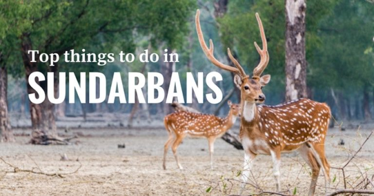 Sundarbans Travel Guide: Top 08 things to do for the best experience