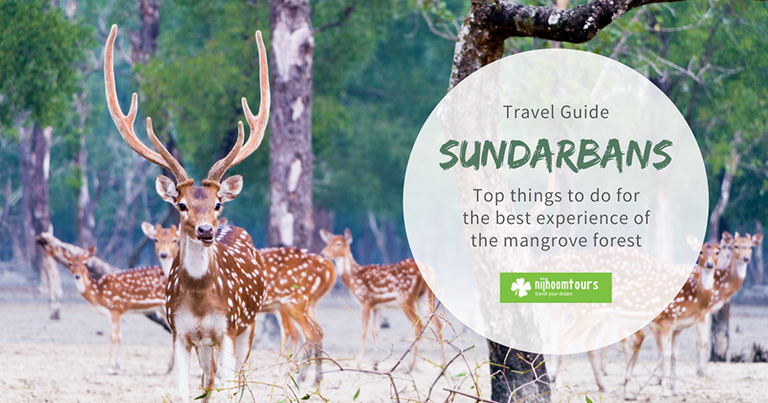 Sundarbans: Top 8 things to do for the best experience