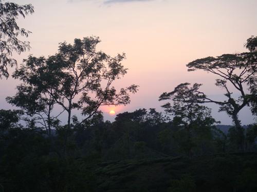 Sunset at Jerin Tea Garden in Srimongol